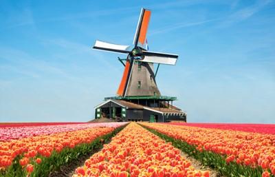 オランダ調査